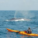 image rory-in-kayak-with-blue-whale-ii-jpg
