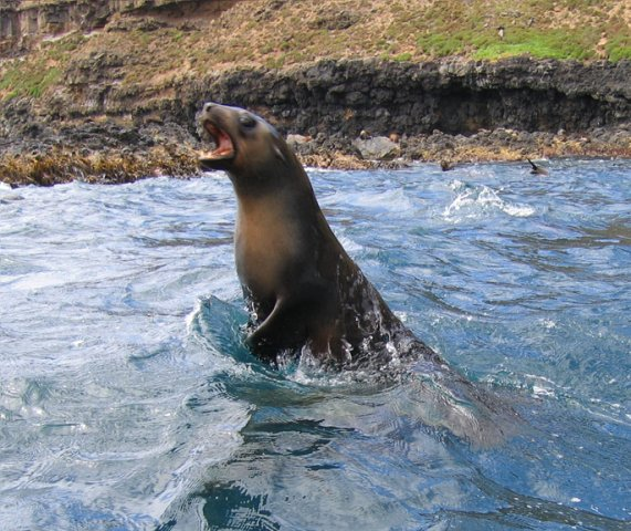 image 9-1_aust-fur-seal-leap-jpg